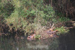 Ô nhiễm nghiêm trọng sông Đào, sông Vinh