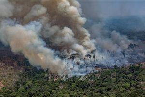 Vùng đất ngập mặn lớn nhất hành tinh tại Brazil bị cháy rừng tàn phá