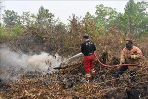 Khói phủ đen trời vì cháy rừng, Indonesia đóng cửa nhiều trường học, sân bay