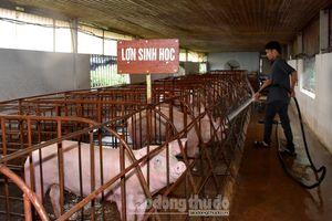 Hiệu quả từ các mô hình chăn nuôi theo hướng an toàn sinh học