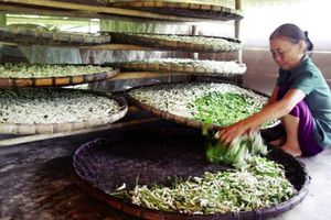 Động lực giúp nông dân thoát nghèo