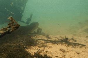 Thợ lặn phát hiện con trăn dài 7 m dưới dòng sông ở Brazil