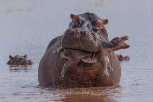 Sóc ước, khỉ thảnh thơi, cá voi tò mò lọt top ảnh động vật hài hước