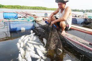 Hà Tĩnh: Nhận định ban đầu nguyên nhân cá nuôi lồng bè chết hàng loạt