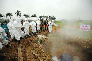 Hà Nội lấy mẫu giám sát môi trường tại ô chôn lấp lợn bị dịch tả châu Phi