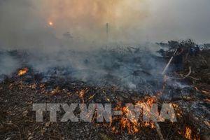 Indonesia đóng cửa hơn 30 lâm trường để hạn chế cháy rừng