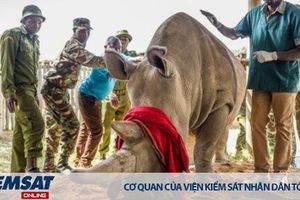 Nỗ lực táo bạo hồi sinh loài tê giác trắng phương Bắc