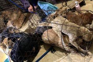 Triệt phá đường dây trộm và tiêu thụ khoảng 100 tấn chó ở Thanh Hóa