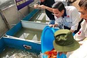 Hà Nội: Thả cá Koi Nhật Bản xuống nơi thí điểm tại sông Tô Lịch và Hồ Tây