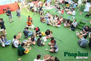 Hàng trăm chú khuyển tụ tập trong lễ hội thú cưng lần đầu tiên tại Hà Nội