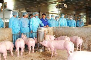 Hà Nội: 55% số xã, phường, thị trấn qua 30 ngày không phát sinh bệnh Dịch tả lợn châu Phi