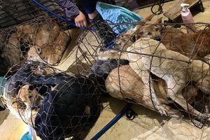 Công an Thanh Hóa triệu tập 30 người trong đường dây trộm chó lớn nhất từ trước đến nay, đã bắt hơn 100 tấn chó