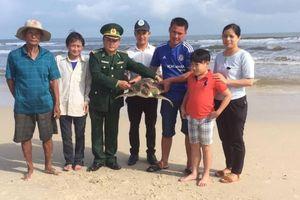Quảng Trị sẽ thành lập đội tình nguyện viên cứu hộ rùa biển