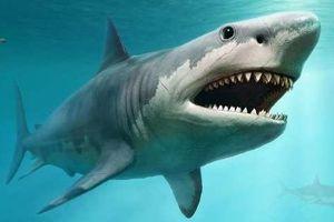 Australia sử dụng UAV giám sát cá mập tại các bãi biển