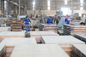 Ngành gỗ thận trọng với gian lận xuất xứ
