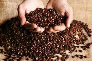 Giá cà phê hôm nay 17/9: Tăng nhẹ 100 đồng/kg