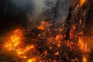 Biến đổi khí hậu tác động tới hệ sinh thái của Australia