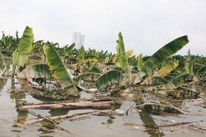 HAGL Agrico (HNG): Khoảng 1.500 ha trái cây sắp thu hoạch tại Lào bị ngập lụt