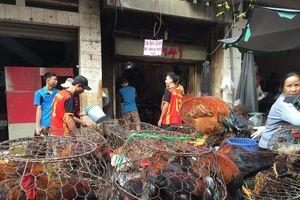 Mỗi tuần người nuôi gà vùng Đông Nam bộ lỗ 62,5 tỉ đồng