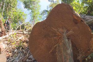 Công an phát hiện hơn 800 m3 gỗ lậu sau 6 tháng điều tra