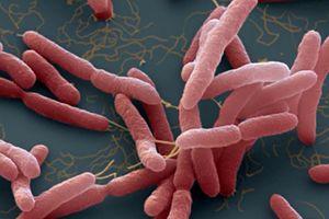 Bộ Y tế cảnh báo phòng ngừa vi khuẩn 'ăn thịt người'