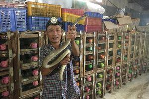 Ớn lạnh người đàn ông nuôi đàn rắn độc hơn 1.000 con, dài cả mét