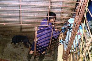 Đường dây trộm hơn 100 tấn chó: Làm hầm 'bí mật' để nhốt chó