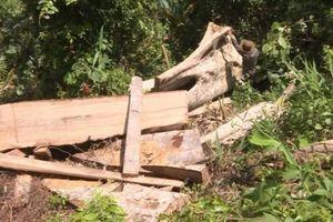 Phát hiện thêm 500 m3 gỗ trong quá trình mở rộng điều tra vụ phá rừng ở Đắk Lắk