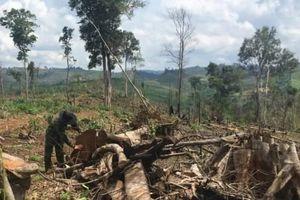 Đắk Nông: Kiến nghị thu hồi dự án sản xuất NLN của Cty Kiến Trúc Mới