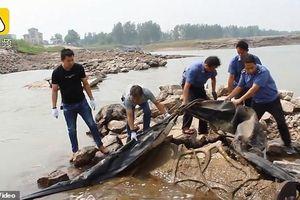 'Quái vật hồ Loch Ness' của Trung Quốc là túi khí cao su rách