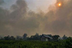 Hàng ngàn trường học ở Malaysia và Indonesia đóng cửa vì không khí ô nhiễm