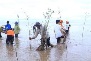 Tình nguyện viên trồng cây phủ xanh rừng ngập mặn Sóc Trăng
