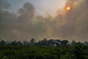 Malaysia, Indonesia đóng cửa hàng ngàn trường học vì cháy rừng