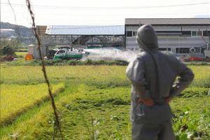 Hàn Quốc phát hiện trường hợp thứ hai nhiễm dịch tả lợn Châu Phi