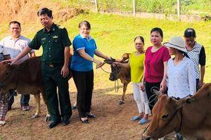 Kon Tum: Tặng bò giống sinh sản cho phụ nữ nghèo