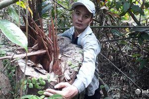 Thanh Hóa: Rừng đầu nguồn bị 'xẻ thịt', gỗ nằm ngổn ngang dưới suối