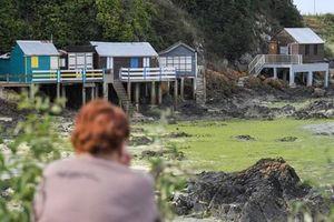 Loài tảo biển giết người trong tích tắc tại 6 bãi biển nước Pháp
