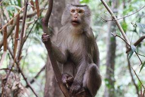Xây dựng phương án bảo tồn 8 loài linh trưởng tại Vườn quốc gia Vũ Quang