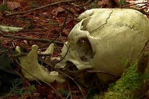Bí ẩn lạnh người về khu rừng thu hút nhiều người đến tự tử ở Nhật Bản