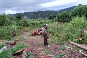 Kiểm lâm 2 huyện 'nhường' nhau, 8 tấn gỗ lậu biến mất khó hiểu