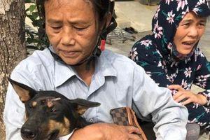 Hỗ trợ đàn chó khủng bị trộm: 'Phải thương như...con người'