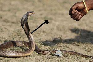 Thêm ảnh rắn cực độc khiến bạn phát cuồng vì yêu quá đỗi