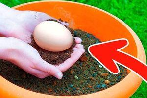 Chôn một quả trứng dưới đất không ngờ lại nhận được kết quả đáng kinh ngạc