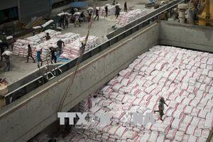 Xuất khẩu gạo của Thái Lan gặp khó khăn do đồng bath mạnh lên
