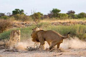 Sư tử cái nổi cơn ghen đánh 'chồng' cặp bồ