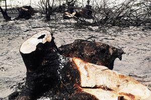 Phá trắng, đốt sạch trên 140ha rừng ở Bình Định