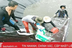 Đâu là hướng đi bền vững cho nuôi tôm trên cát ở Hà Tĩnh?