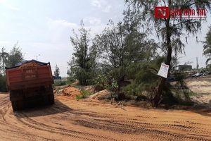 Ninh Thuận: Cận cảnh doanh nghiệp khai thác cát 'băm nát' rừng đồi