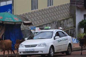 Vụ taxi Hòa Bình Xanh 'núp bóng' xe hợp đồng: Thu hồi toàn bộ phù hiệu?