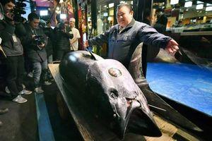 Loạt hải sản đắt nhất thế giới, chỉ nhà giàu mới dám ăn